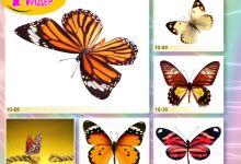 c_220_150_16777215_00_images_Bigprint_41.jpg
