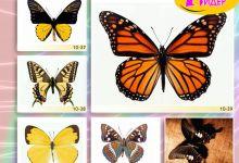 c_220_150_16777215_00_images_Bigprint_42.jpg