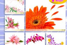 c_220_150_16777215_00_images_Bigprint_44.jpg