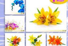 c_220_150_16777215_00_images_Bigprint_46.jpg