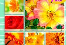 c_220_150_16777215_00_images_Bigprint_50.jpg