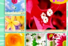 c_220_150_16777215_00_images_Bigprint_52.jpg