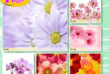 c_220_150_16777215_00_images_Bigprint_53.jpg