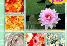 c_220_150_16777215_00_images_Bigprint_54.jpg