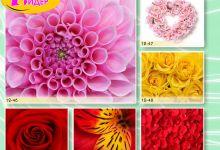 c_220_150_16777215_00_images_Bigprint_55.jpg