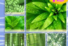 c_220_150_16777215_00_images_Bigprint_64.jpg