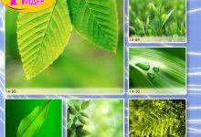 c_220_150_16777215_00_images_Bigprint_65.jpg