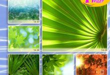 c_220_150_16777215_00_images_Bigprint_66.jpg