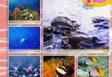 c_220_150_16777215_00_images_Bigprint_68.jpg