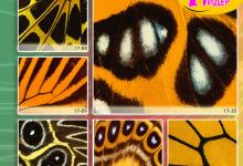 c_220_150_16777215_00_images_Bigprint_76(1).jpg