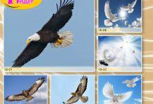 c_220_150_16777215_00_images_Bigprint_77(1).jpg