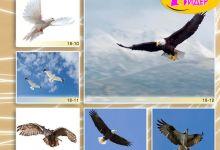 c_220_150_16777215_00_images_Bigprint_78(1).jpg